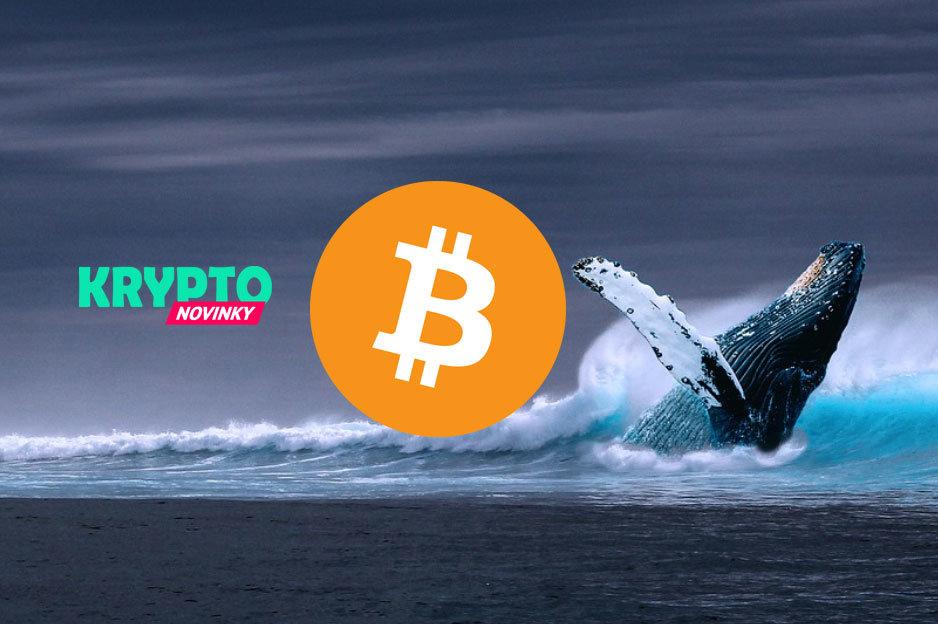 Bitcoin - veľryba