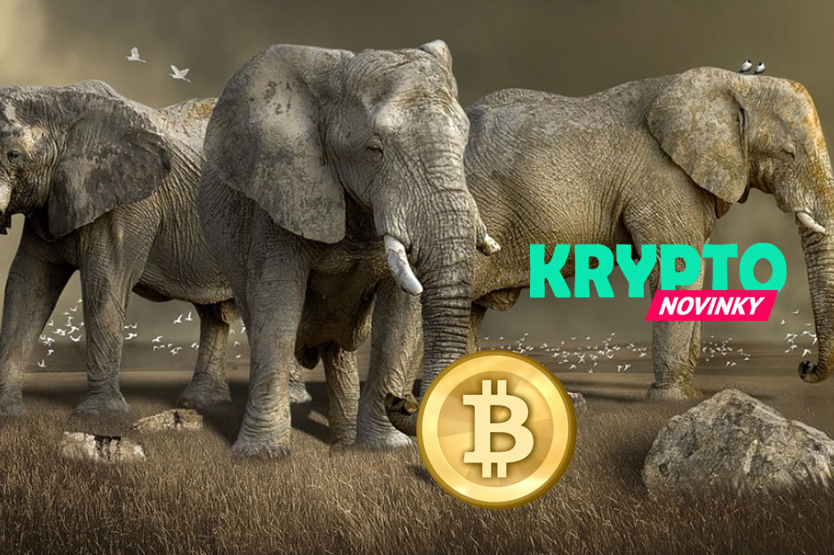 Bitcoin Giganti