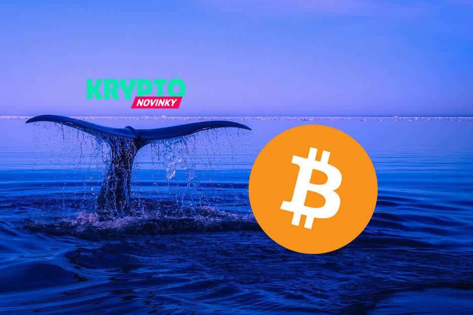 Bitcoin veľryba